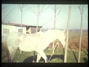 beyaz atlilar